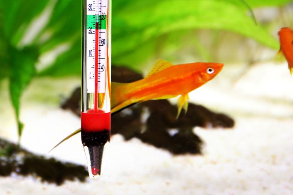 Best Aquarium Thermometers in 2019 1