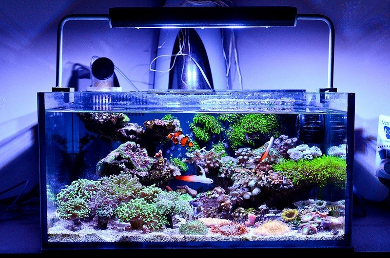 Common Problems with Aquarium Plants 1