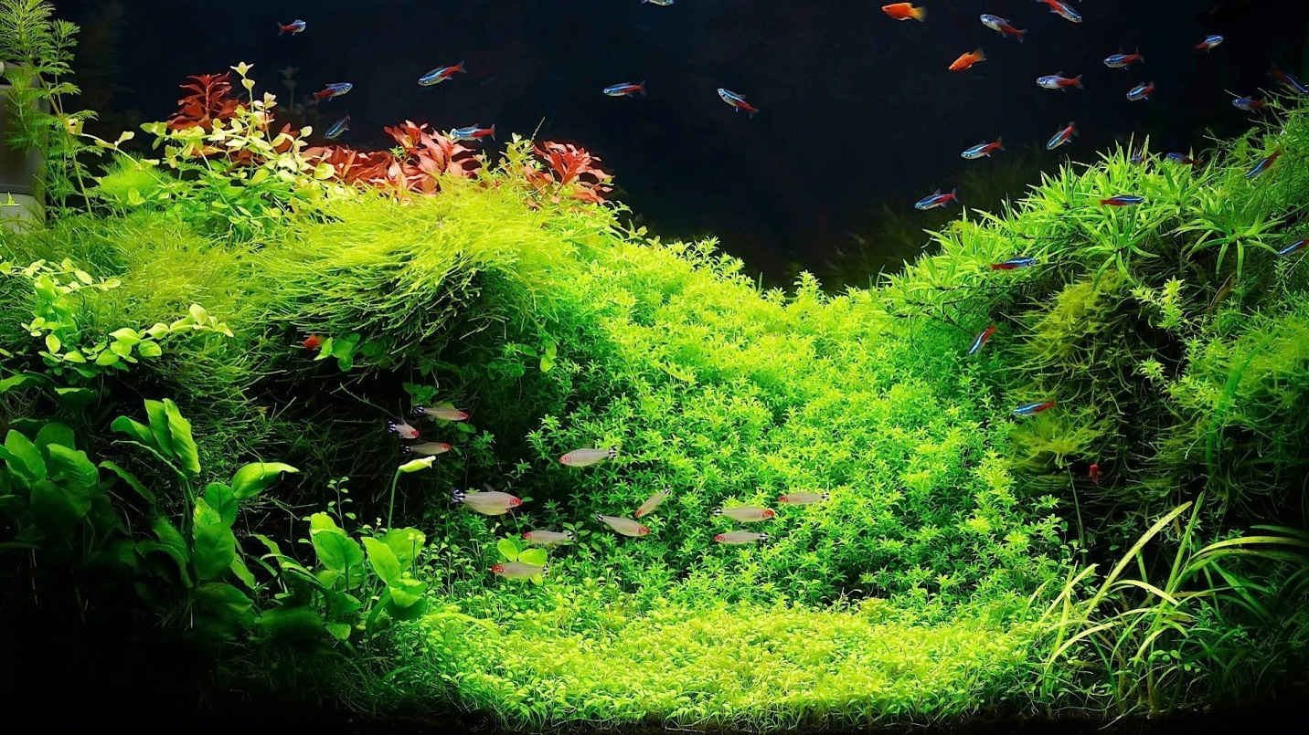 How to Put Live Plants to Your Aquarium 1
