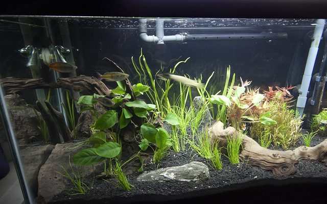 Canister filter for aquarium