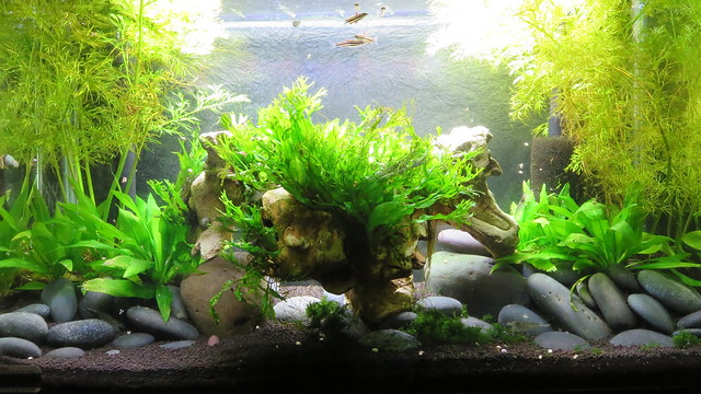 Plants for Freshwater Aquarium