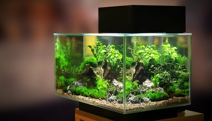 What is the Best 10 Gallon Fish Tank in the Market