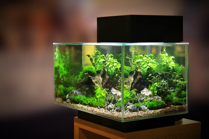 Best 10 Gallon Fish Tank In The Market