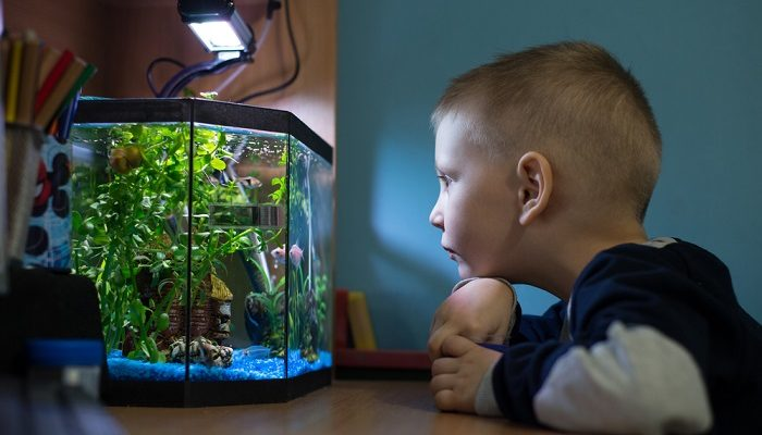 What is the Best 5 Gallon Fish Tank