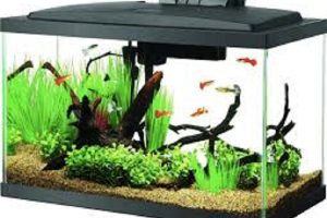 What is the Best 10 Gallon Fish Tank Filter