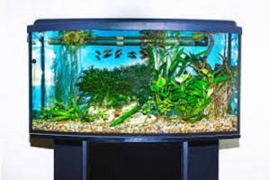What is the Best 20 Gallon Fish Tank in the Market.jpg