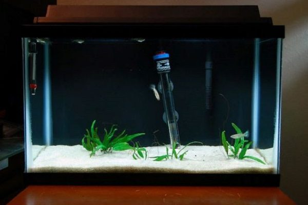 What is the Best Heater for 10 Gallon Tank