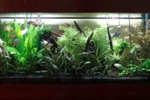 Choosing the Best Filter for 100 Gallon Aquarium