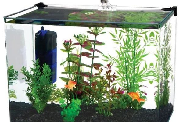 What is the Best Filter for 5 Gallon Tank