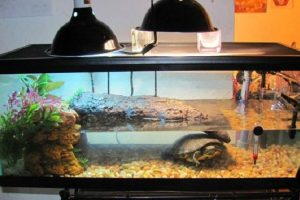 What is the Best Filter for Turtle Tank