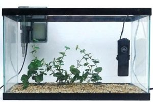 What is the Best Heater for 20 Gallon Tank