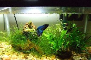 What is the Best Heater for 5 Gallon Tank