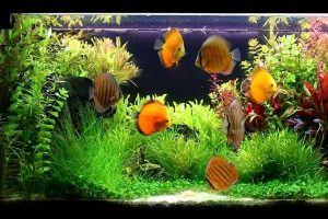 What is the Best Heater for 55 Gallon Tank