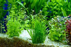 Best Low Light Aquarium Plants