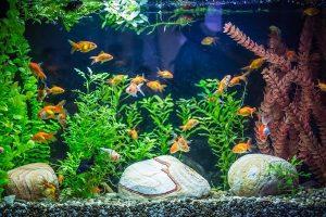 How do I Choose the Best Goldfish Tank
