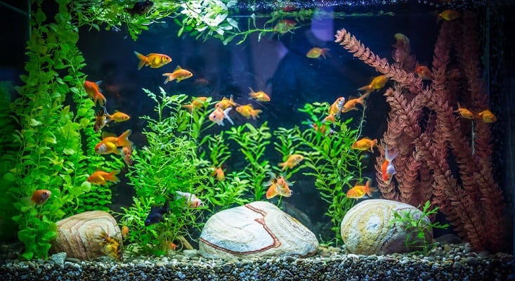 How do I Choose the Best Goldfish Tank