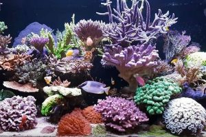 How do I Choose the Best LED Lighting for Reef Tank