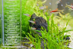 What is the Best Aquarium Air Pump in the Market Today