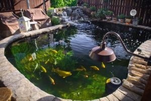 What is the Best Koi Pond Filter