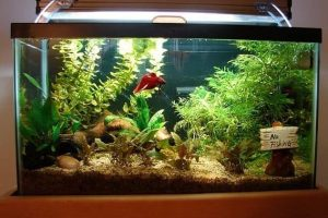 What is the Best Tank for Betta Fish