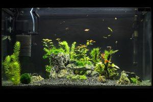 Best Aquarium Powerheads